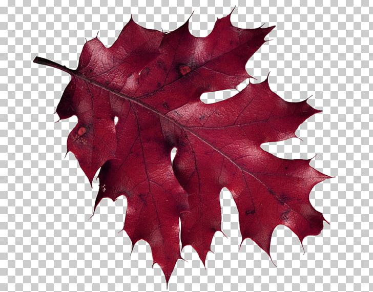 Maple Leaf Autumn Leaves PNG, Clipart, Autumn, Autumn Leaf Color, Autumn Leaves, Brown, Download Free PNG Download