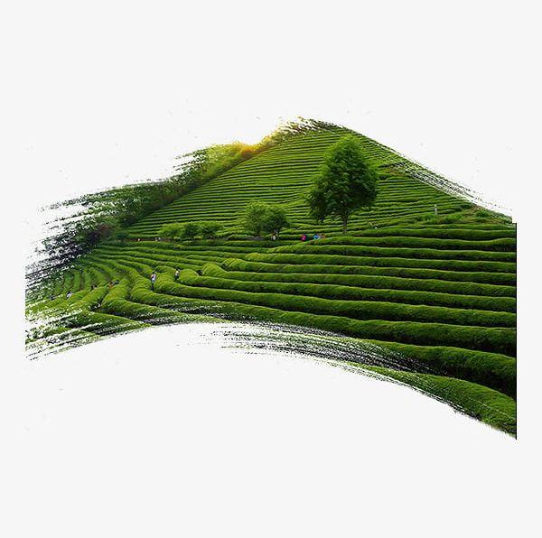 Tea Garden Clip Art