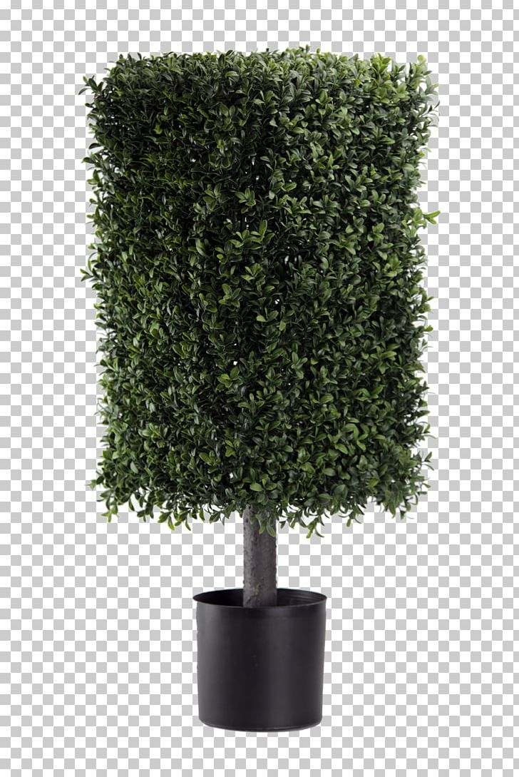 Tree Topiary Evergreen Buxus Sempervirens Shrub Png Clipart Box Buxus Sempervirens Design Toscano Evergreen Floor Free