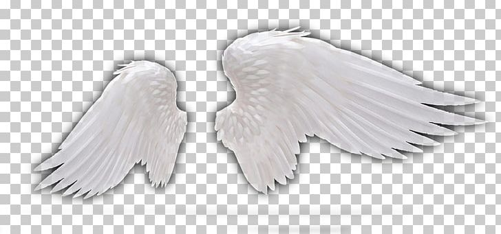 Feather Wing Angel PNG, Clipart, Angel, Angel Feather, Angels, Angel Vector, Angel Wing Free PNG Download