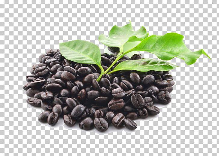 Coffee Bean Coffee Bean Starbucks Ingredient PNG, Clipart, Bean, Beans, Black, Coffee, Coffee Aroma Free PNG Download