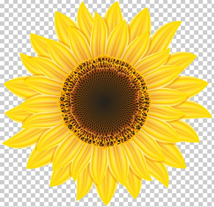 Common Sunflower Pixel Computer File PNG, Clipart, Common Sunflower, Computer File, Daisy Family, Download, Flower Free PNG Download