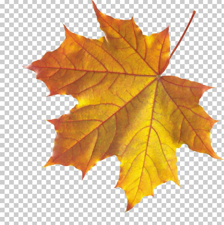 Autumn Leaf Color Maple Leaf PNG, Clipart, Autumn, Autumn Leaf Color, Autumn Leaves, Autumn Png Leaf, Computer Icons Free PNG Download