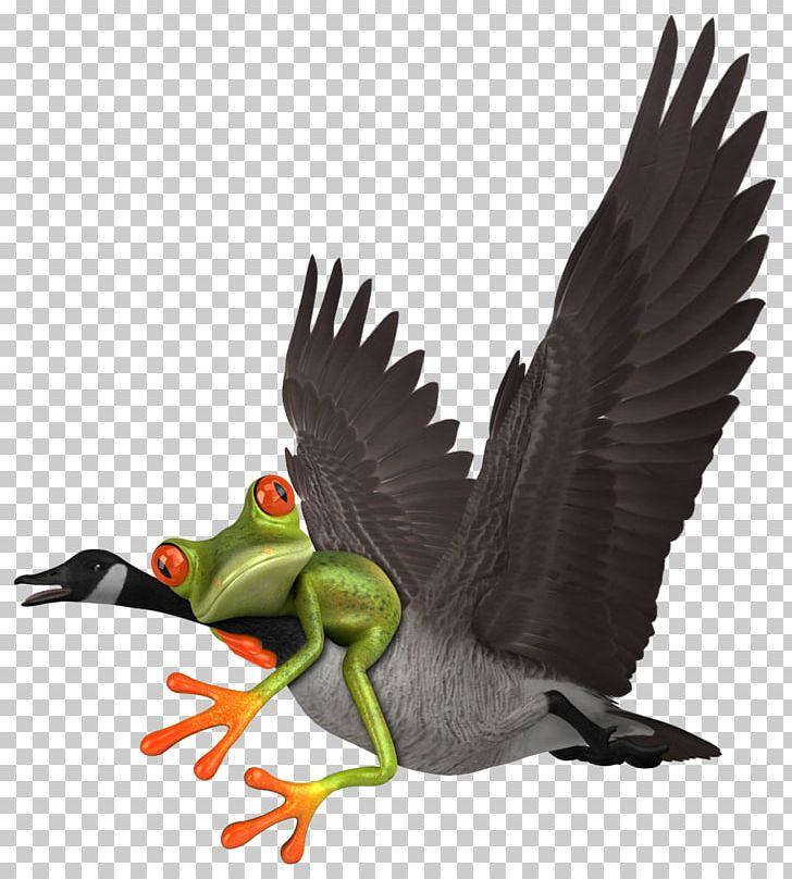 Duck Goose 3D Modeling TurboSquid Animation PNG, Clipart, 3d