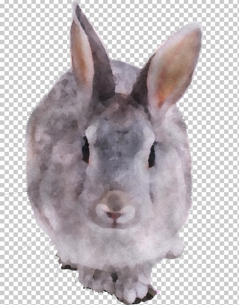 Rabbit Rabbits And Hares Snout Nose Hare PNG, Clipart, Brown, Ear, Hare, Nose, Rabbit Free PNG Download
