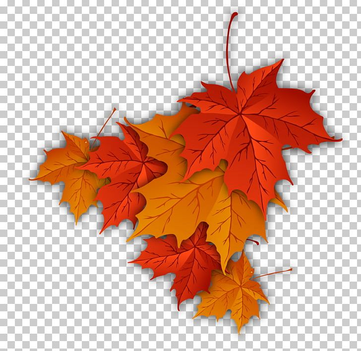 Autumn Leaf Color Autumn Leaf Color Maple Leaf PNG, Clipart, Autumn, Autumn Leaf, Autumn Leaf Color, Color, Drawing Free PNG Download
