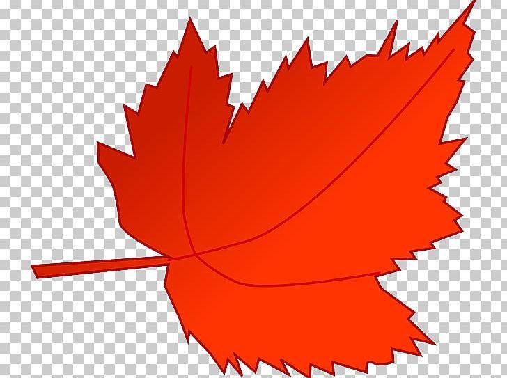 Autumn Leaf Color PNG, Clipart, Autumn, Autumn Leaf Color, Color, Flower, Flowering Plant Free PNG Download