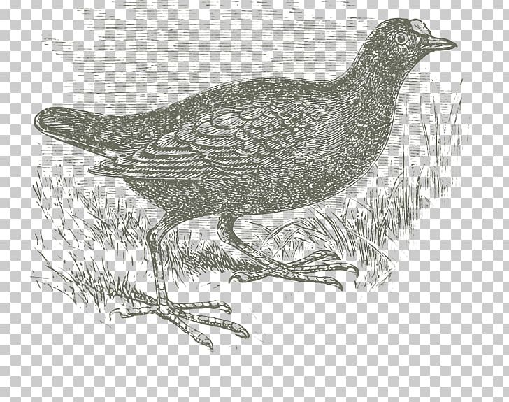 Grouse Lark Cygnini Goose Galliformes PNG, Clipart, Anatidae, Animals, Beak, Bird, Cinclidae Free PNG Download
