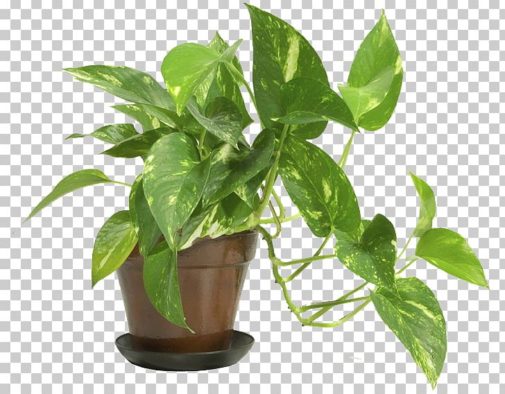 Houseplants Vector Illustration Royalty Free Cliparts, Vectors, And Stock  Illustration. Image 86371357.