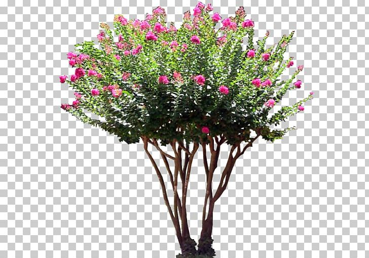 Shrub Tree Flower PNG, Clipart, Artificial Flower, Bougainvillea, Branch, Crepe Myrtle, Cut Flowers Free PNG Download