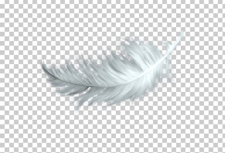 White Feather PNG, Clipart, Black And White, Color, Encapsulated Postscript, Falling Fea, Falling White Feathers Free PNG Download