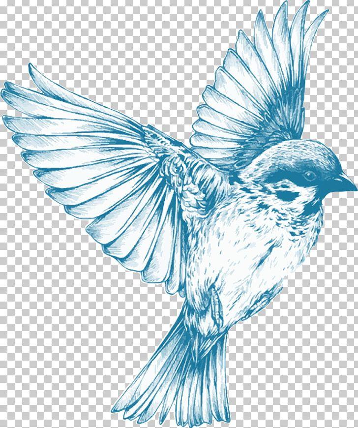 Drawing Birds Drawing Birds Sketch Png Clipart Art
