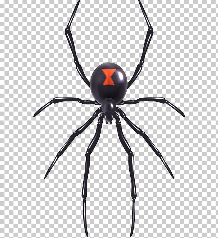 Spider Web Southern Black Widow Illustration Png Clipart