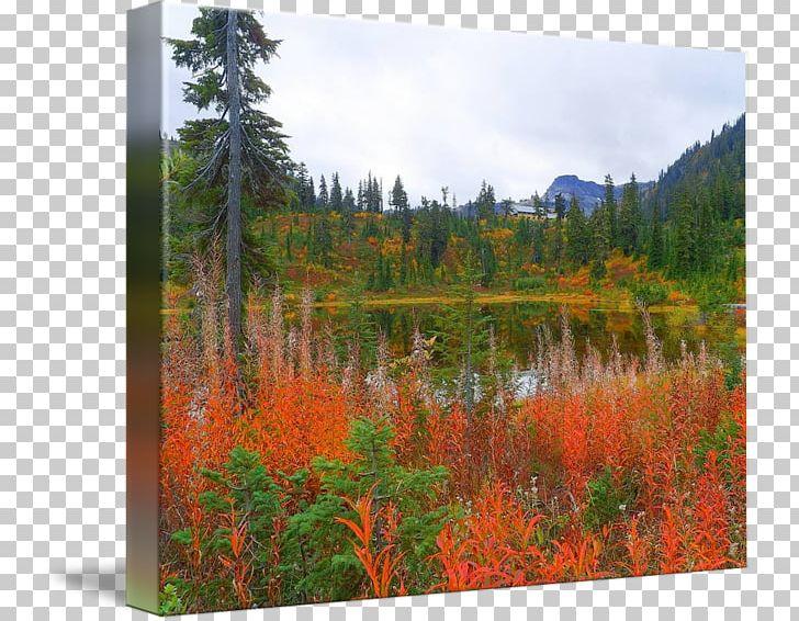 Temperate Broadleaf And Mixed Forest Nature Reserve Pond Vegetation Bog PNG, Clipart, Autumn Price To, Biome, Bog, Broadleaved Tree, Ecosystem Free PNG Download