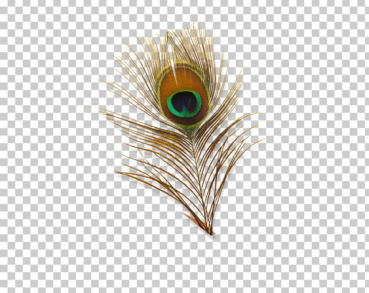 Bird Feather Peafowl PNG, Clipart, Adobe Illustrator, Animals, Bird, Clip Art, Color Free PNG Download