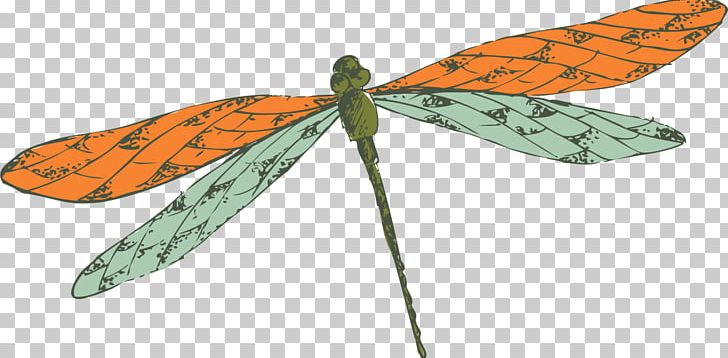 Butterfly Insect Dragonfly PNG, Clipart, Animation, Arthropod, Bea, Cartoon, Decorative Free PNG Download