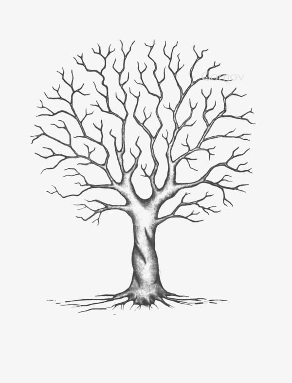 Trees Without Leaves PNG, Clipart, Cartoon, Cartoon Tree ...