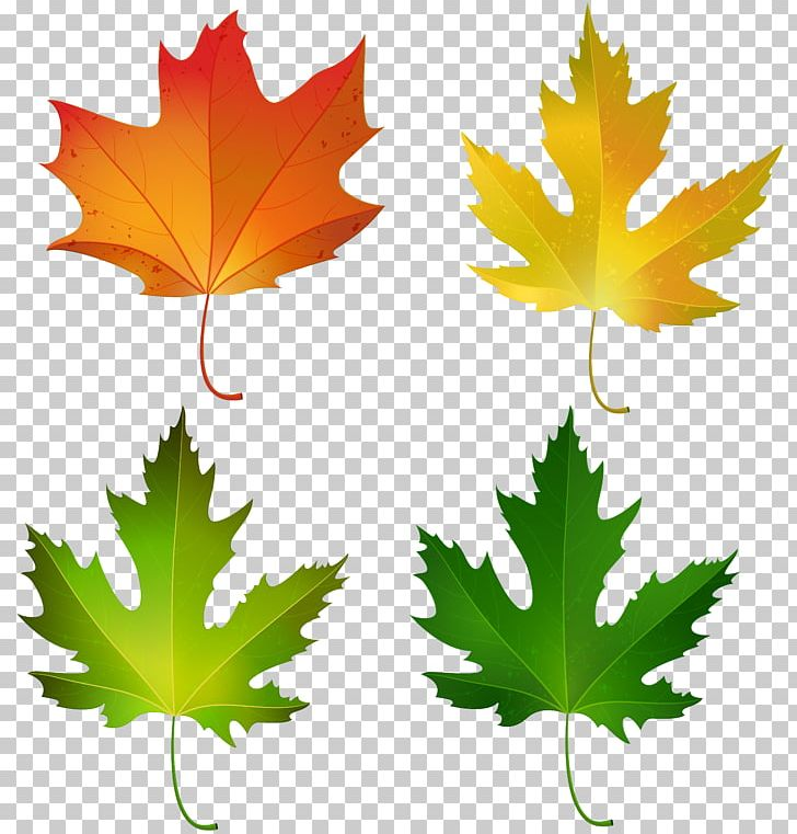 Maple Leaf Autumn Leaf Color Sugar Maple PNG, Clipart, Autumn, Autumn Leaf Color, Canadian Gold Maple Leaf, Clipart, Clip Art Free PNG Download