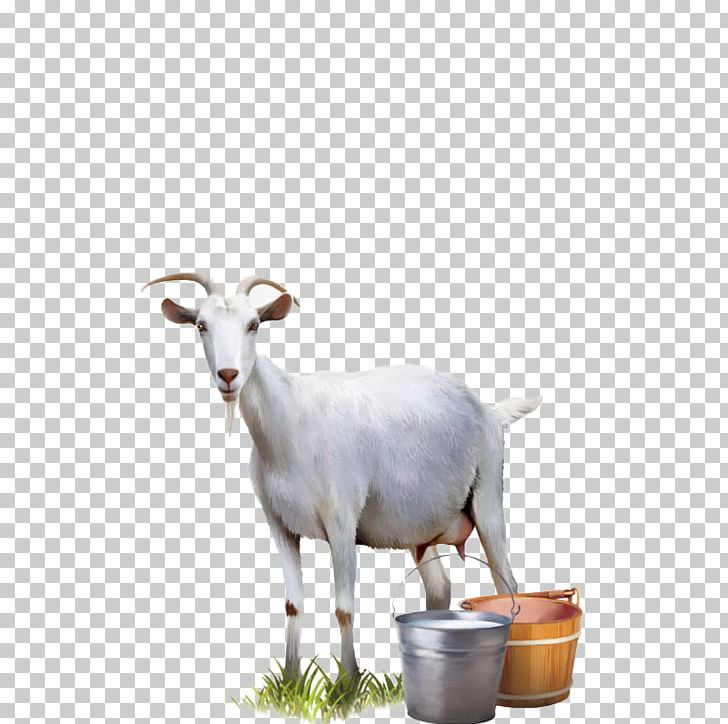 Goat Milk Cattle Sheep PNG, Clipart, Animals, Automatic Milking, Bucket, Cartoon Goat, Cattle Free PNG Download
