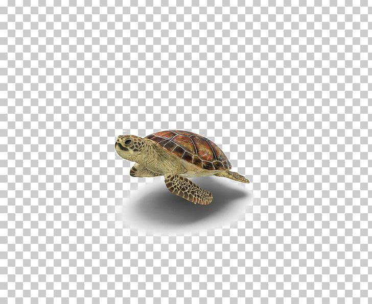 Sea Turtle Box Turtles Portable Network Graphics Transparency PNG, Clipart, Animals, Aquatic Animal, Box Turtle, Box Turtles, Desktop Wallpaper Free PNG Download