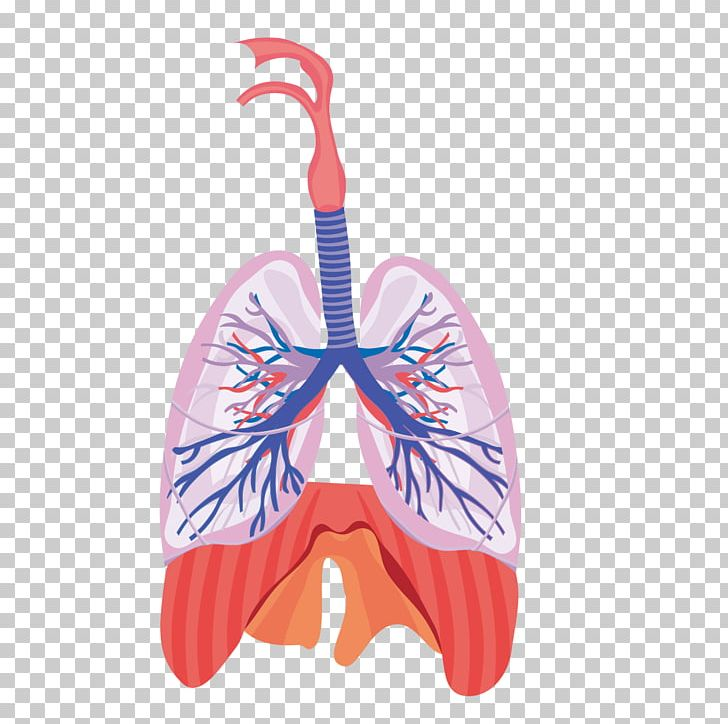 Funny, Smiling Human Lungs And Heart Characters, Internal Organs.. Royalty  Free Cliparts, Vectors, And Stock Illustration. Image 74122782.