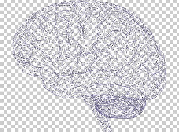 Human Brain Cerebrum Polygon Mesh PNG, Clipart, Agy, Brain, Brain Implant, Building Blocks, Cerebral Hemisphere Free PNG Download