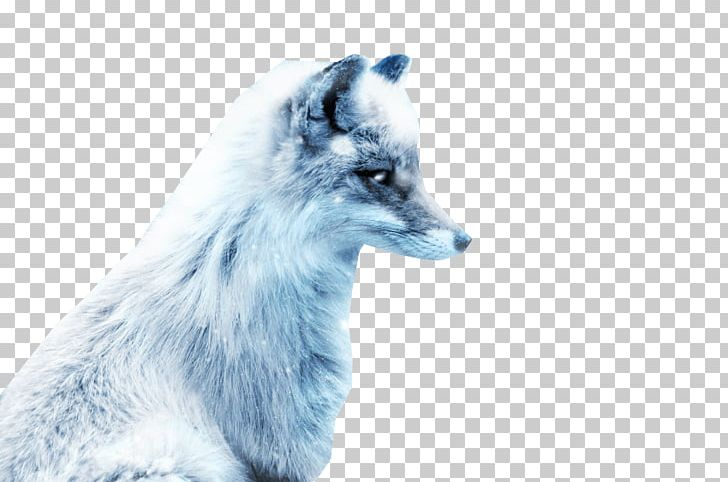 Arctic Fox Silver Fox Red Fox Png Clipart Animal Animals