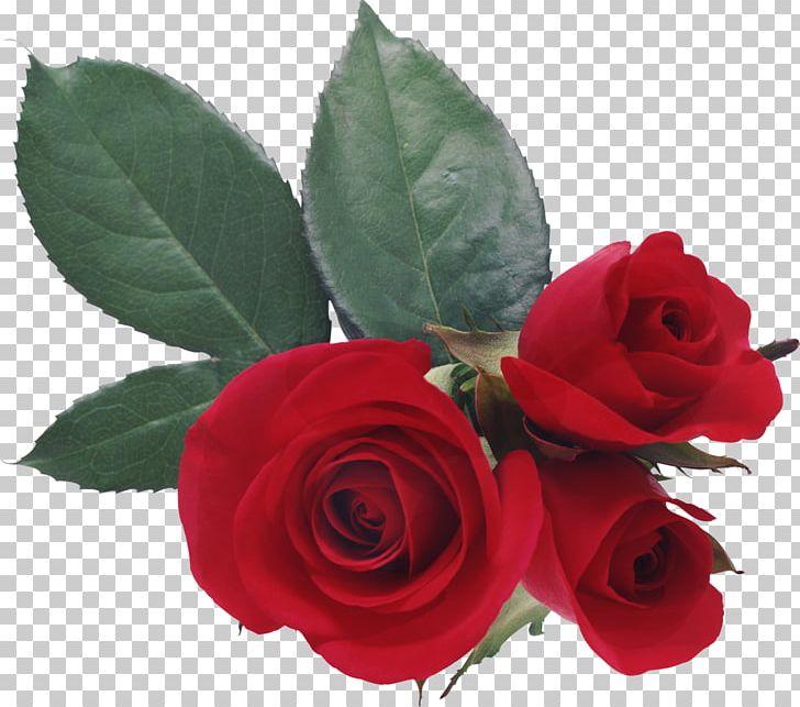 Love Rose Desktop Heart Png Clipart Artificial Flower