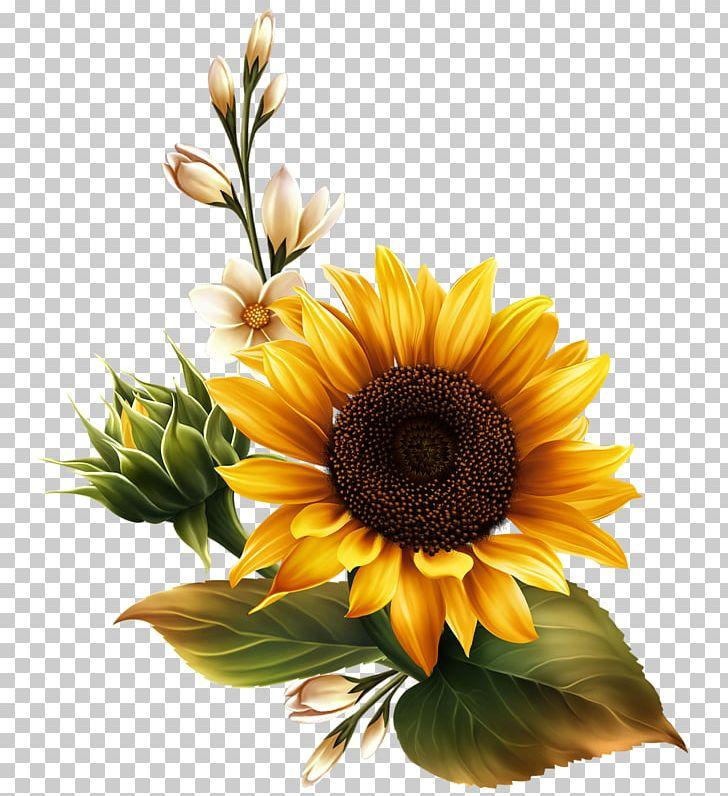 Common Sunflower Sunflower Seed PNG, Clipart, Art, Artist ...
