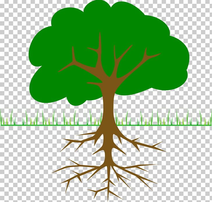 The Great Kapok Tree PNG, Clipart, Branch, Christmas Tree