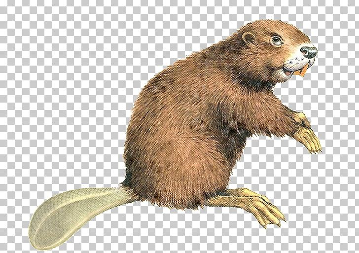 Eurasian Beaver North American Beaver Rodent Computer File PNG, Clipart, Animal, Animals, Beaver, Beaver Png, Button Free PNG Download