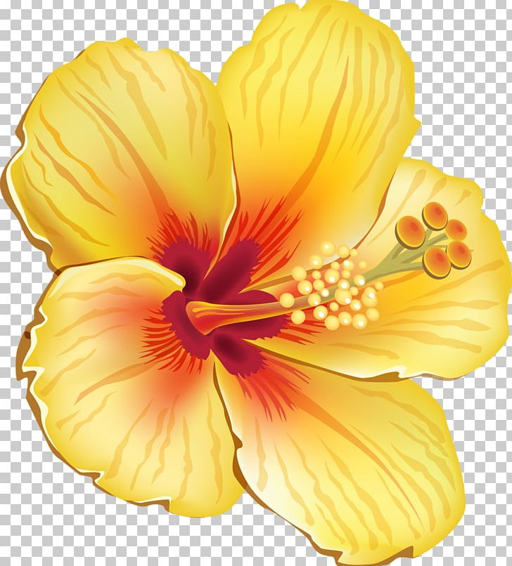 Hawaiian Hibiscus Shoeblackplant Flower PNG, Clipart