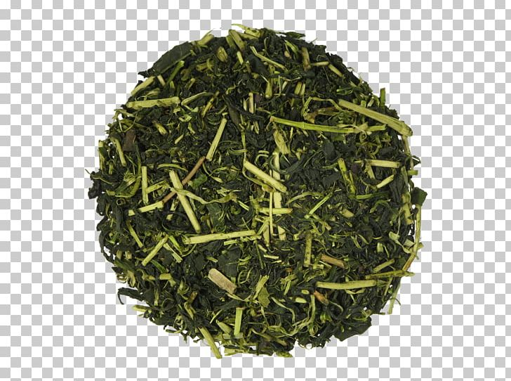 Sencha Hōjicha Green Tea Tamaryokucha PNG, Clipart, Assam Tea, Bancha, Biluochun, Ceylon Tea, Chun Mee Tea Free PNG Download