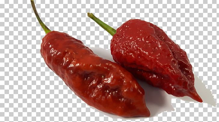 Habanero Piquillo Pepper Chile De árbol Bird's Eye Chili Tabasco Pepper PNG, Clipart, Bhut Jolokia, Chile De Arbol, Habanero, Piquillo Pepper, Tabasco Pepper Free PNG Download