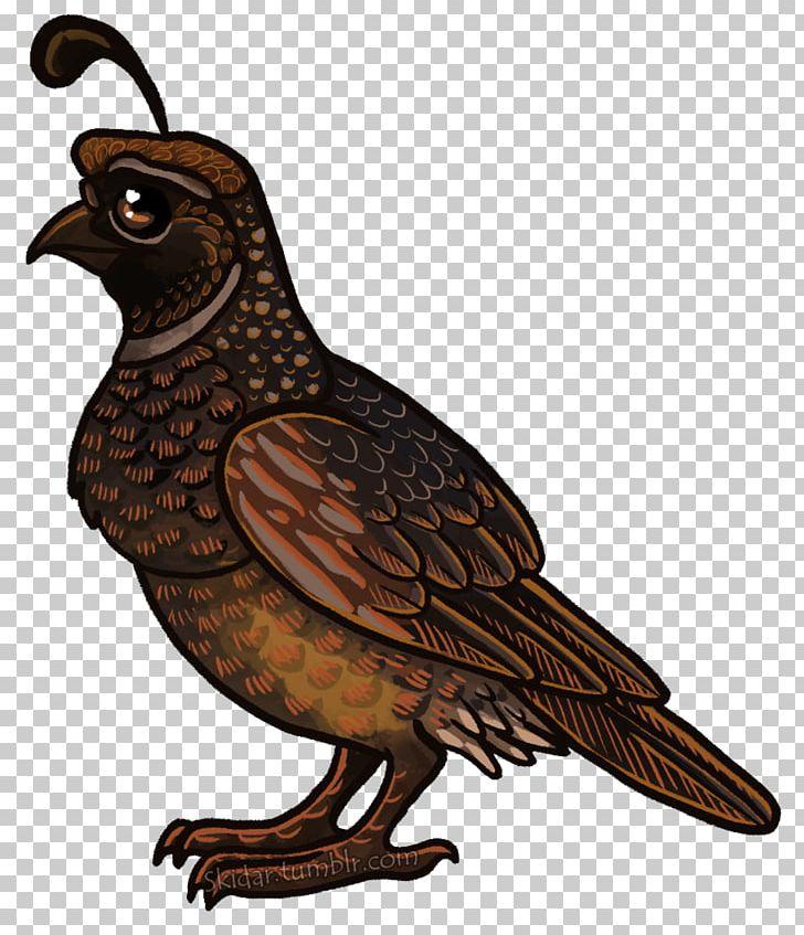 Bird Of Prey Beak Hawk Galliformes PNG, Clipart, Animal, Animals, Beak, Bird, Bird Of Prey Free PNG Download