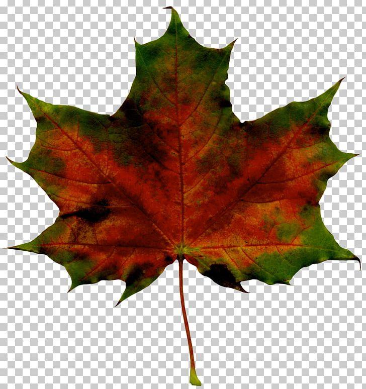 Maple Leaf Autumn PNG, Clipart, Autumn, Autumn Leaf Color, Autumn Leaves, Burknar, Clip Art Free PNG Download