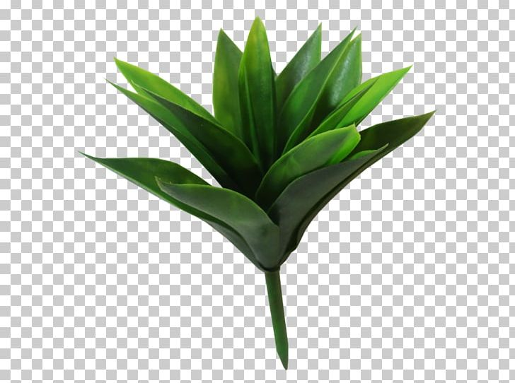 Leaf Plant Stem Flowerpot Agave INAV DBX MSCI AC WORLD SF PNG, Clipart, Agave, Flowerpot, Grass, Inav Dbx Msci Ac World Sf, Leaf Free PNG Download