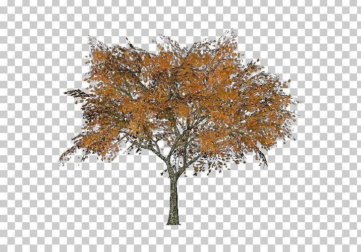 Twig Autumn Oak Deciduous Leaf PNG, Clipart, Autumn, Branch, Deciduous, Leaf, Maple Free PNG Download