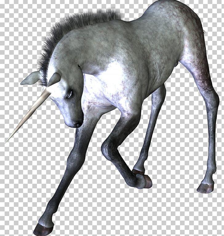 Unicorn Horn Horse Mythology PNG, Clipart, Avatan Plus, Desktop Wallpaper, Fairy Tale, Fantasia, Fantasy Free PNG Download