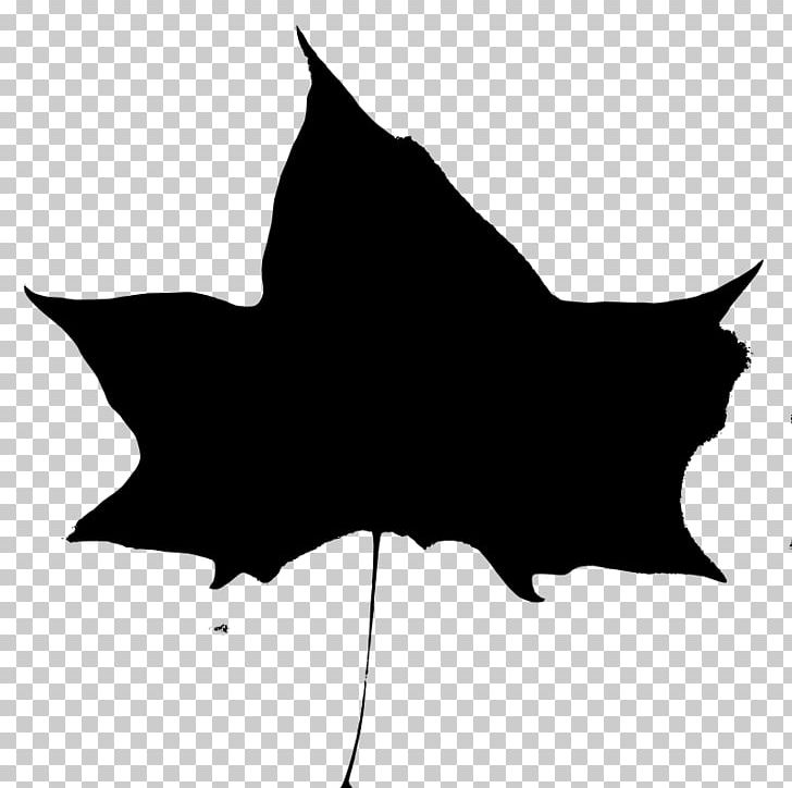 Mammal Cat Like Mammal Leaf PNG, Clipart, Autumn, Black, Black And White, Black Cat, Blog Free PNG Download