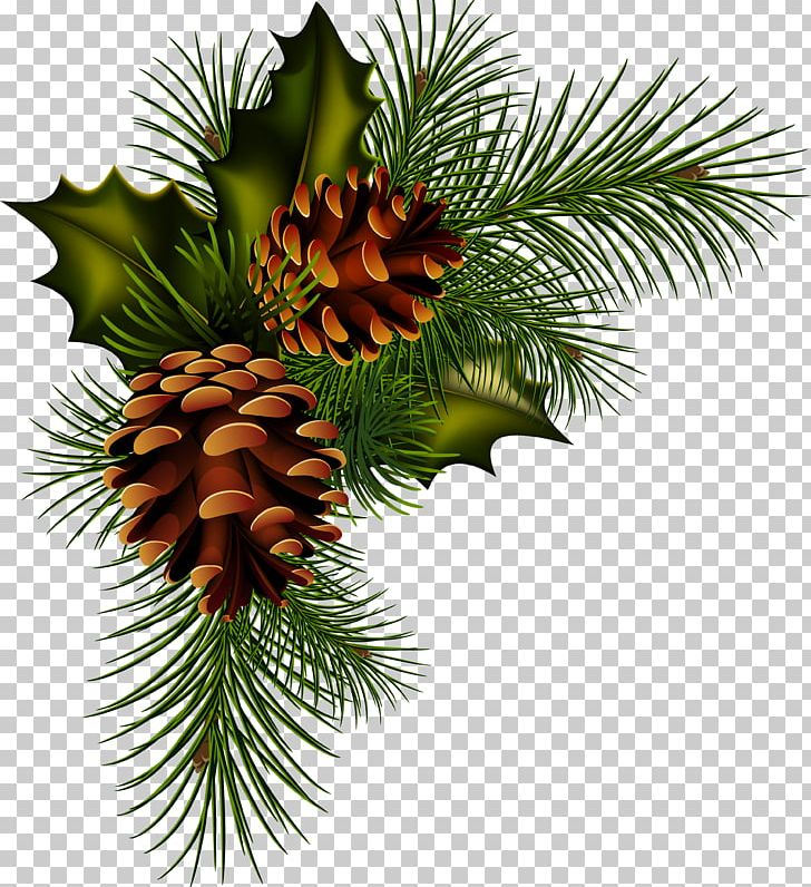 Christmas Png.Conifer Cone Pine Christmas Png Clipart Artichokes