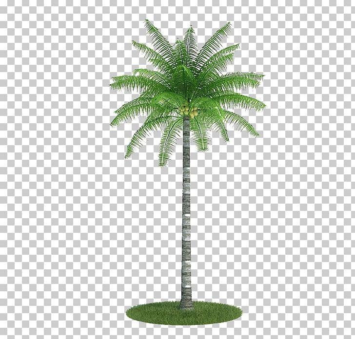 Palm Trees 3D Modeling Autodesk 3ds Max Wavefront  obj File