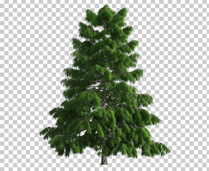 Portable Christmas Lights.Spruce Christmas Tree Portable Network Graphics Christmas