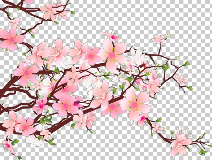 Cherry Blossom Portable Network Graphics PNG, Clipart, Azalea, Blossom, Branch, Cherry, Cherry Blossom Free PNG Download