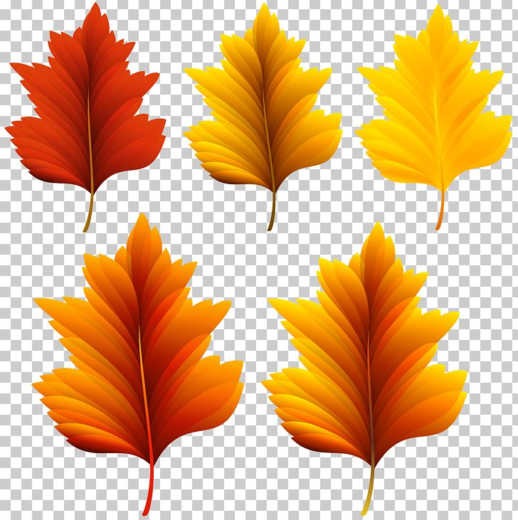Autumn Leaf Color PNG, Clipart, Autumn, Autumn Leaf Color, Beautiful, Clip Art, Clipart Free PNG Download