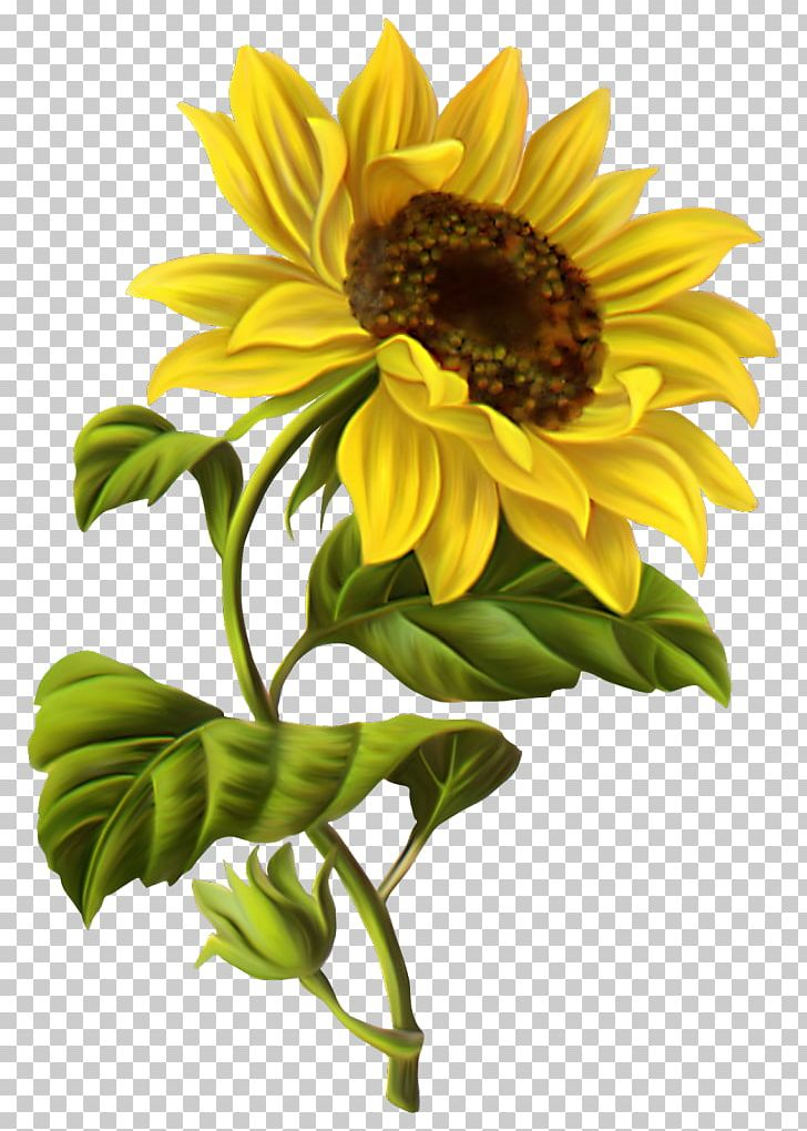 watercolor dog JPG watercolor Boxer with sunflowers PNG digital download,clip art