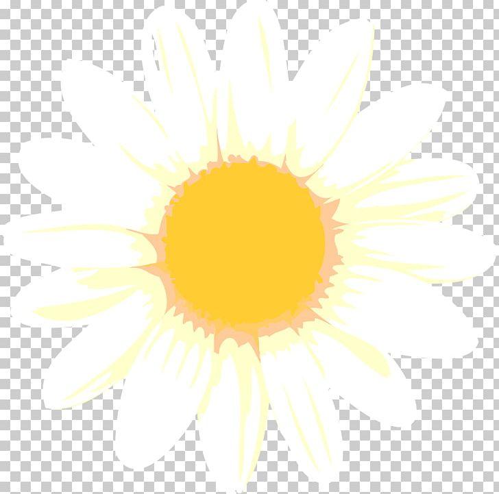 Desktop Sunlight Computer Close-up Font PNG, Clipart, Circle, Close Up, Closeup, Computer, Computer Wallpaper Free PNG Download