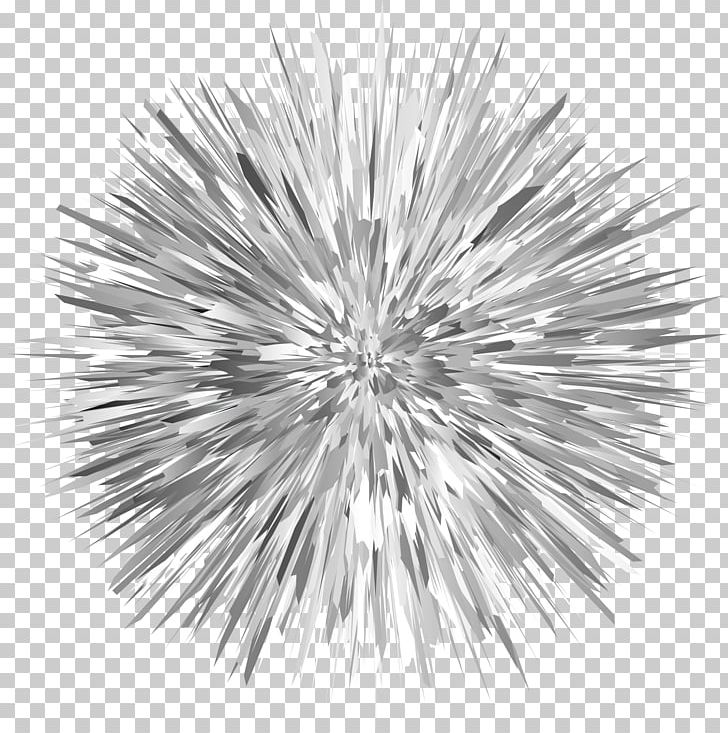 Red Sea Urchin Coloring Book Sea Otter Drawing PNG, Clipart, Animal, Animals, Black And White, Branch, Circle Free PNG Download