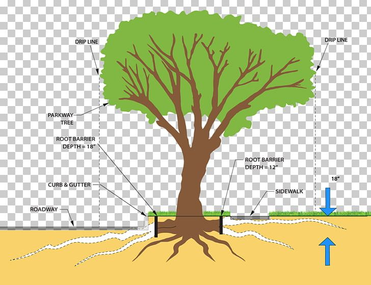 tree plant stem root system pruning png, clipart, ash, branch, cutting,  diagram, grass free png download
