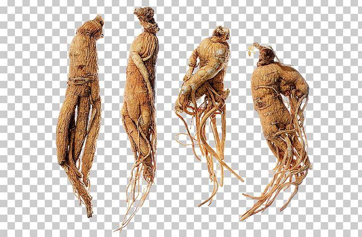 bayan azdirici bitkiler